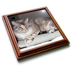 3dRose Jos Fauxtographee- Cat on Towel - A sweet pet cat sit