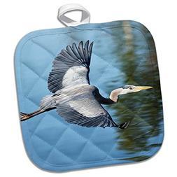 3dRose USA, California. Great Blue Heron Flying Over Lake. P
